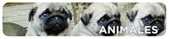 Pegatinas de mascotas y otros animales
